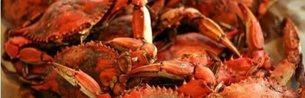 DSRC Adult Summerfest featuring Crab Feast and Live Music: Sat, July 14th